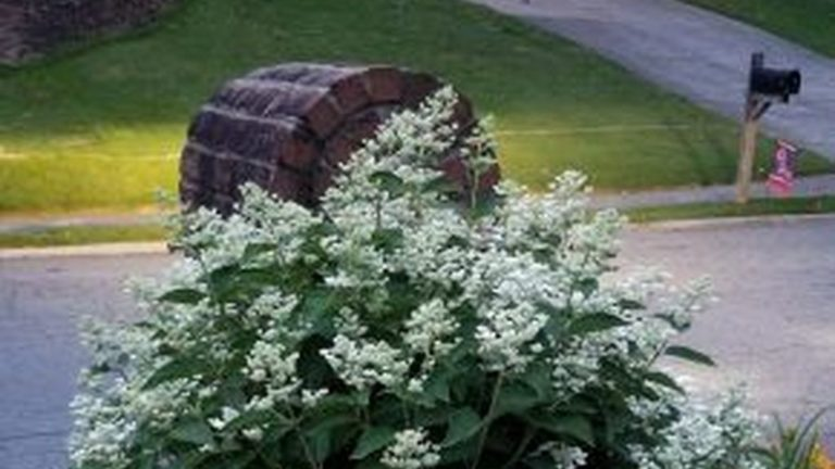 Beautiful Hydrangea Design Ideas Landscaping Your Front Yard 05