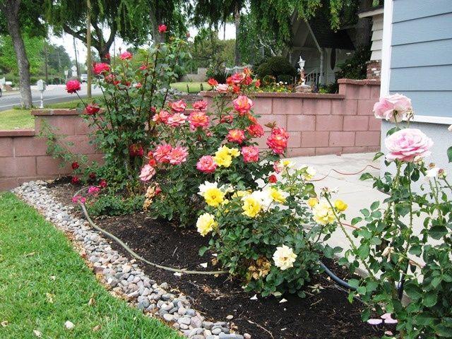 DIY Rose Garden Ideas