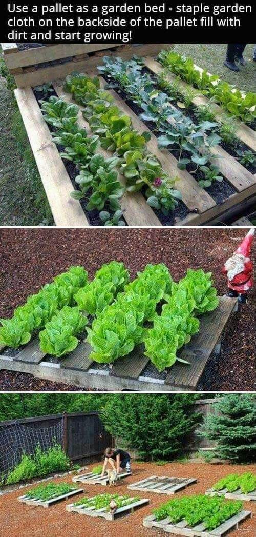 Simple Vegetable Garden Ideas