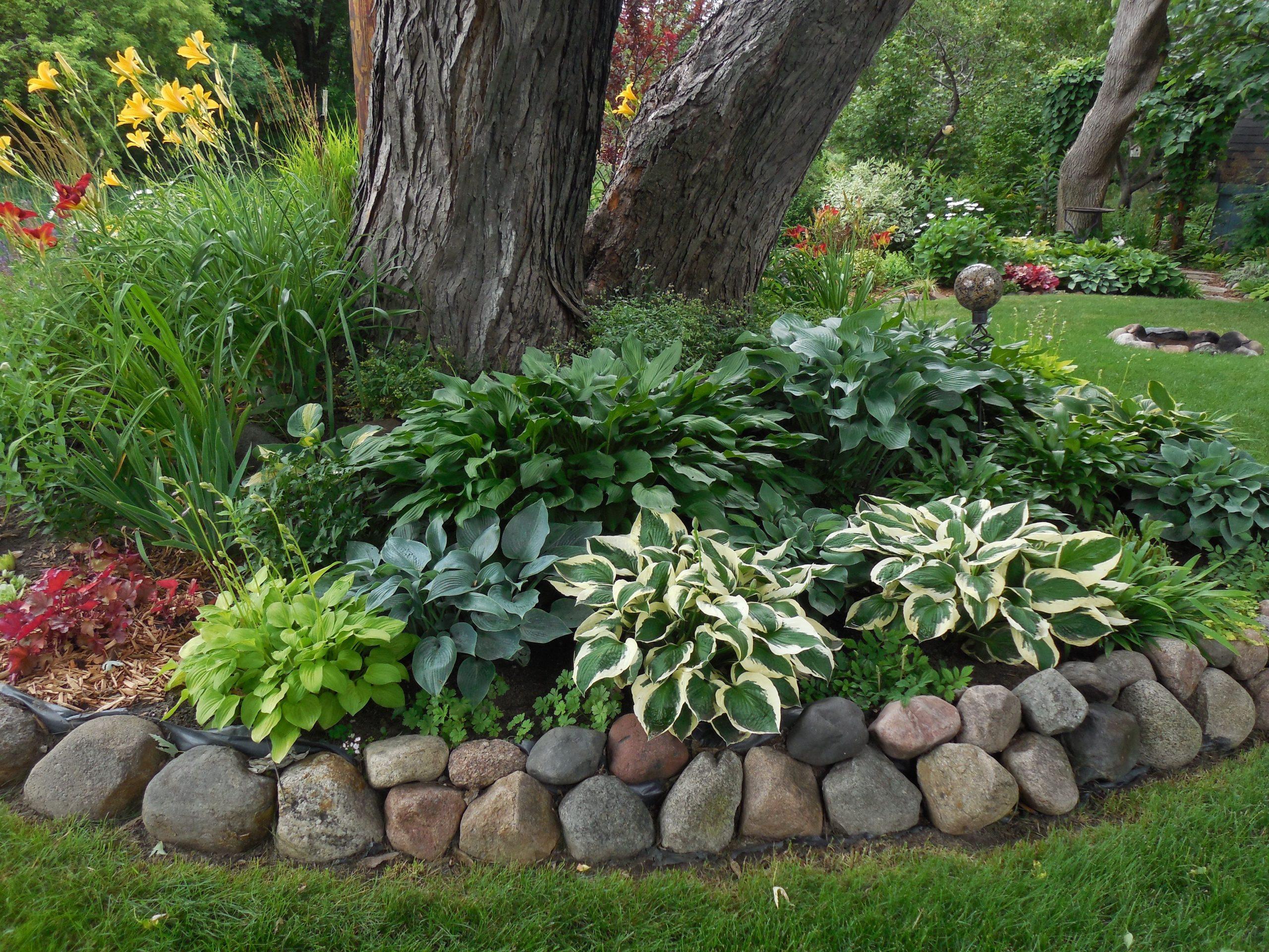 Under Tree Garden Ideas