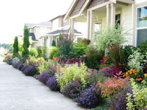 Front Yard Landscaping Plants