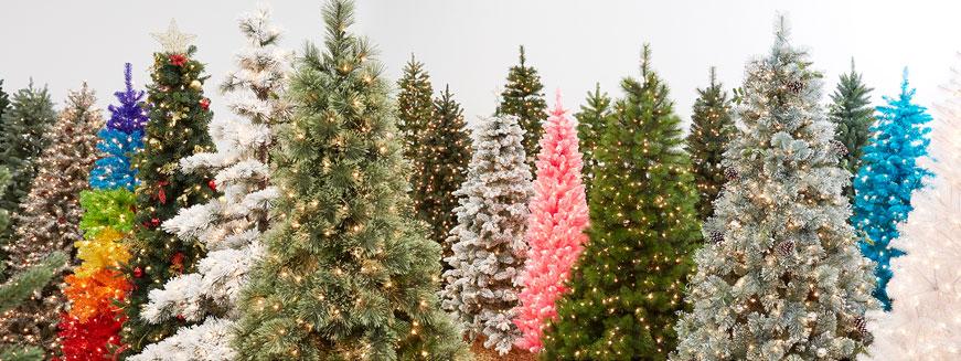 Lowes Live Christmas Trees
