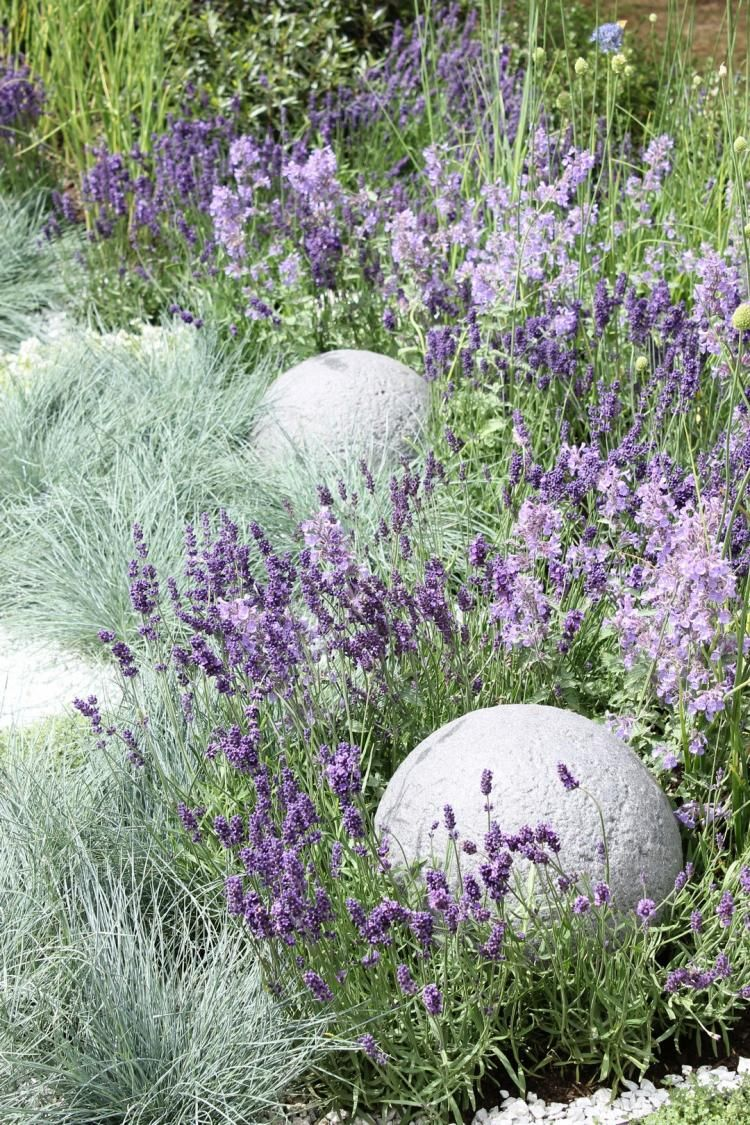 Small Lavender Garden Ideas