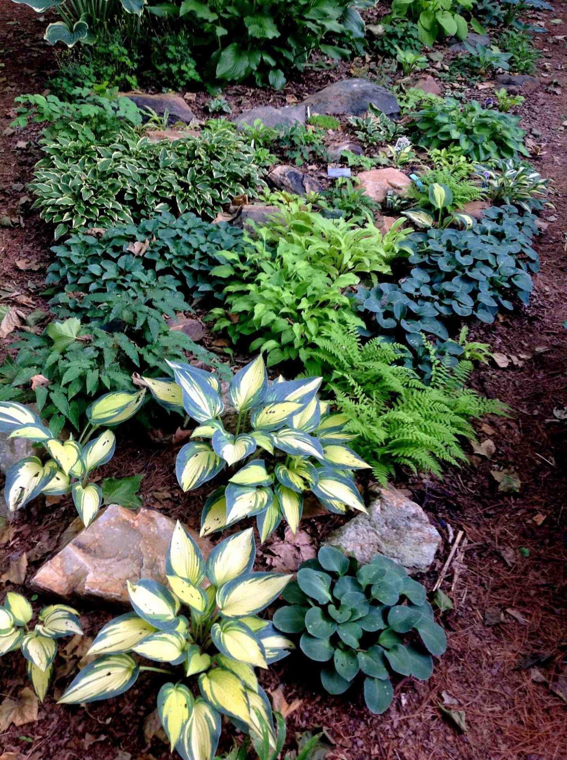 Shaded Rock Garden Ideas