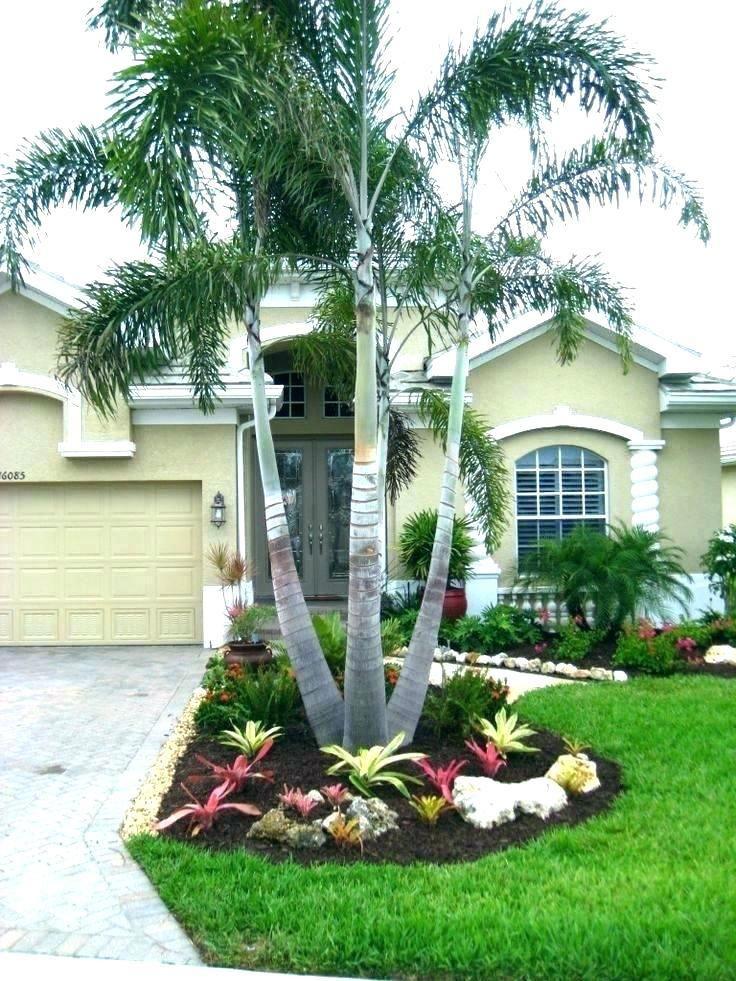 Palm Tree Front Yard