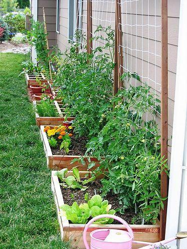 Backyard Veggie Garden Ideas